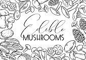 Hand drawn edible mushrooms