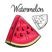 Watermelon, vector drawing icon