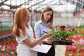 Two business women having a conversation while visiting greenhouse