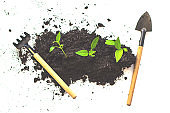 Young green nature sprout in the soil is growing up. ecology and agriculture concept. Home gardening. Miniature gardening tools on white background. Top view. Zero waste.