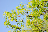 Nature spring scene with tree branch and green leaves on blue sky background