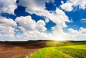 Beautiful sunny day in the field with blue sky. Ukraine, Europe.