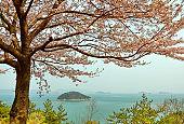 Springtime landscape in South Korea