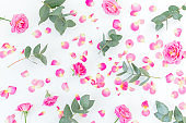 Floral pattern with pink roses and eucalyptus isolated on white background. Flat lay, top view.