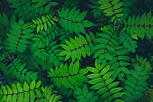 Relaxing textured summer garden green leaves background