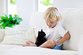 Child playing with baby cat. Kid and kitten.