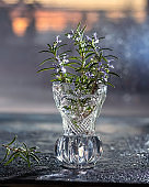 Fresh blooming rosemary plant in a glass vase