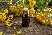 A dark bottle of common tansy essential oil with fresh blooming Tanacetum vulgare
