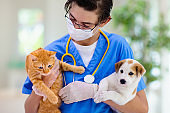 Vet with dog and cat. Puppy and kitten at doctor.