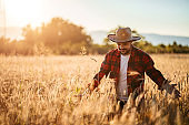 Farmer in his cereal field