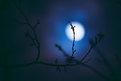 Full Moon Through Dry Branches