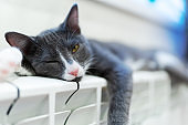 cat on the heating radiator