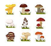 Forest mushrooms flat illustrations set