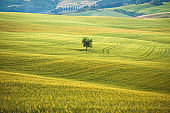 Nature view morning landscape tree in center and the  Scenic over country beautiful country road at Famous Tuscany landscape with curved road and cypress Italy