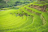 Mu Cang Chai town/Vietnam : H'Mong women are working on the rice terrace