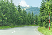 Pine Forest Road