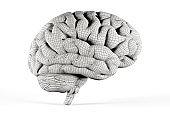 Human brain coated with mesh