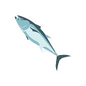 Tuna, thunnus thynnus fresh marine fish