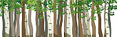 Forest background with many trunks of deciduous trees