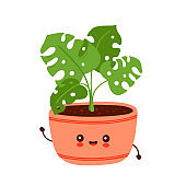 Cute happy funny monstera plant in pot