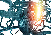 Anatomy of Human heart and veins