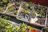 High Angle View of Young Plants in Wooden Crates
