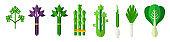 Mix of lettuce leaves vector illustration in flat design. Salad ingredients.
