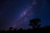 Starry sky and milky way with tree