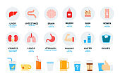 Human organs and daily drink vector flat illustration. Set with liver, brain, blood, skin, water, coffee for website (shop) and. Isolated on white