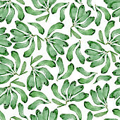 Green banana seamless pattern design on white background. Hand drawn watercolor illustration