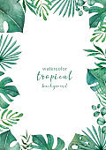Jungle plam and leaves of tropical plants. Green rectangle horizontal floral frame with liana branches. Hand drawn watercolor exotic illustration. Space for text.