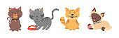 Cute kittens, cat.