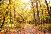 Road in autumn forest