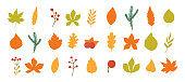 Autumn leaves, leaf.
