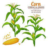 corn vector set