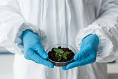 cropped view of biologist in latex gloves holding leaves in lab