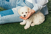 cropped view of woman with Havanese puppy sitting on grass