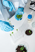 cropped view of multicultural biologists holding green leaves in lab