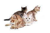 Front view of four kittens.