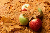 selective focus of ripe tasty apples and autumnal leaf
