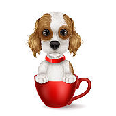 Cartoon dog sitting in the cup