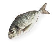 dorado fish isolated white background