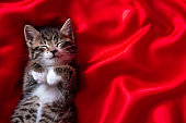 adorable smiling striped kitten lying on back sleeping over red textile. Cute pets cats, valentines and Christmas card