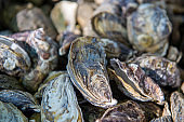 Discarded oyster shells. view of pile oyster shells. Selective focus.