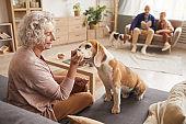 Smiling Senior Woman Playing with Senior Dog