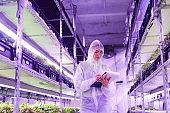 Female Worker in Greenhouse Plantation