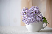 Room interior with gentle purple lilacs flower blossom in tea cup on table and curtain hanging on wall, tender romantic spring home decor in morning light, decorating house with syringa