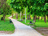 Wooden benches in a picturesque city summer park stand along a paved walkway.