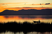 Wonderful sunrise on a lake with a fisherman in his boat