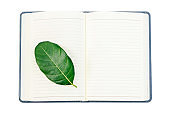 Fresh green leaf on open blank notebook isolated on white background,